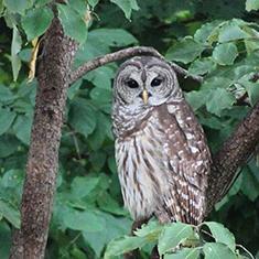 owl_235.jpg